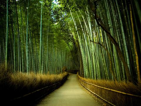 ¿Lider tipo Bambú? (Rep.)