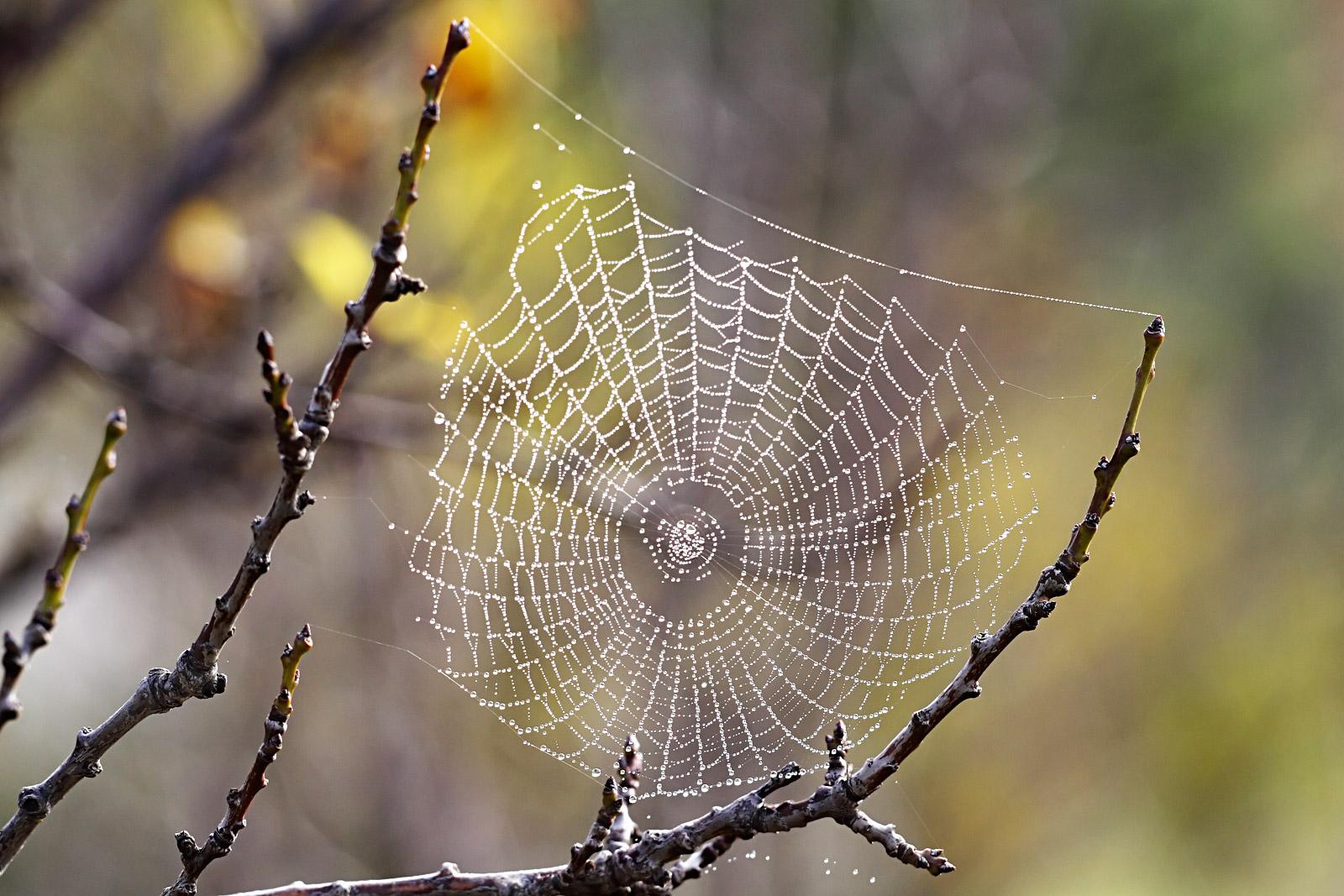 ¿La araña protectora?