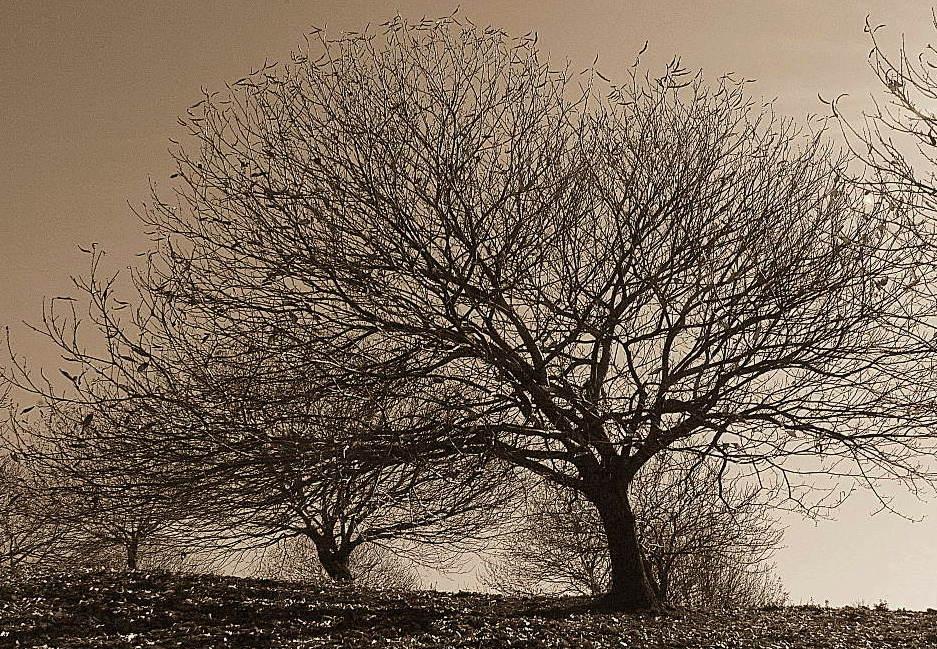 ¿Árboles sin vida? (Rep.)