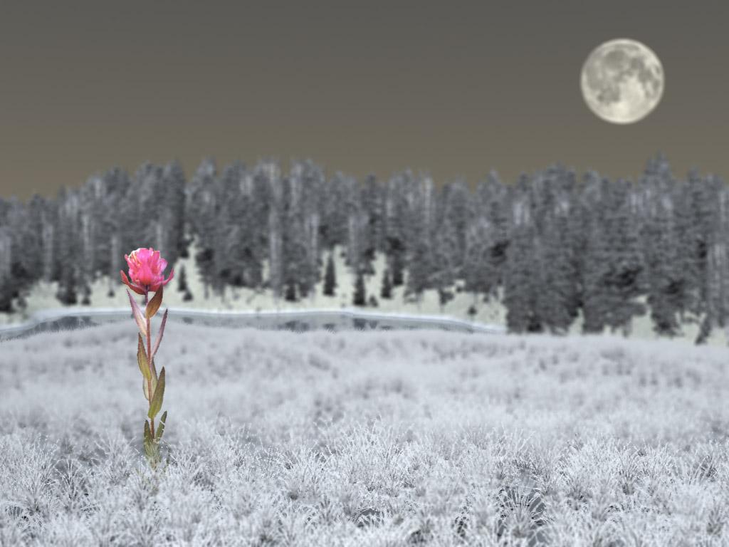 Rosa inesperada