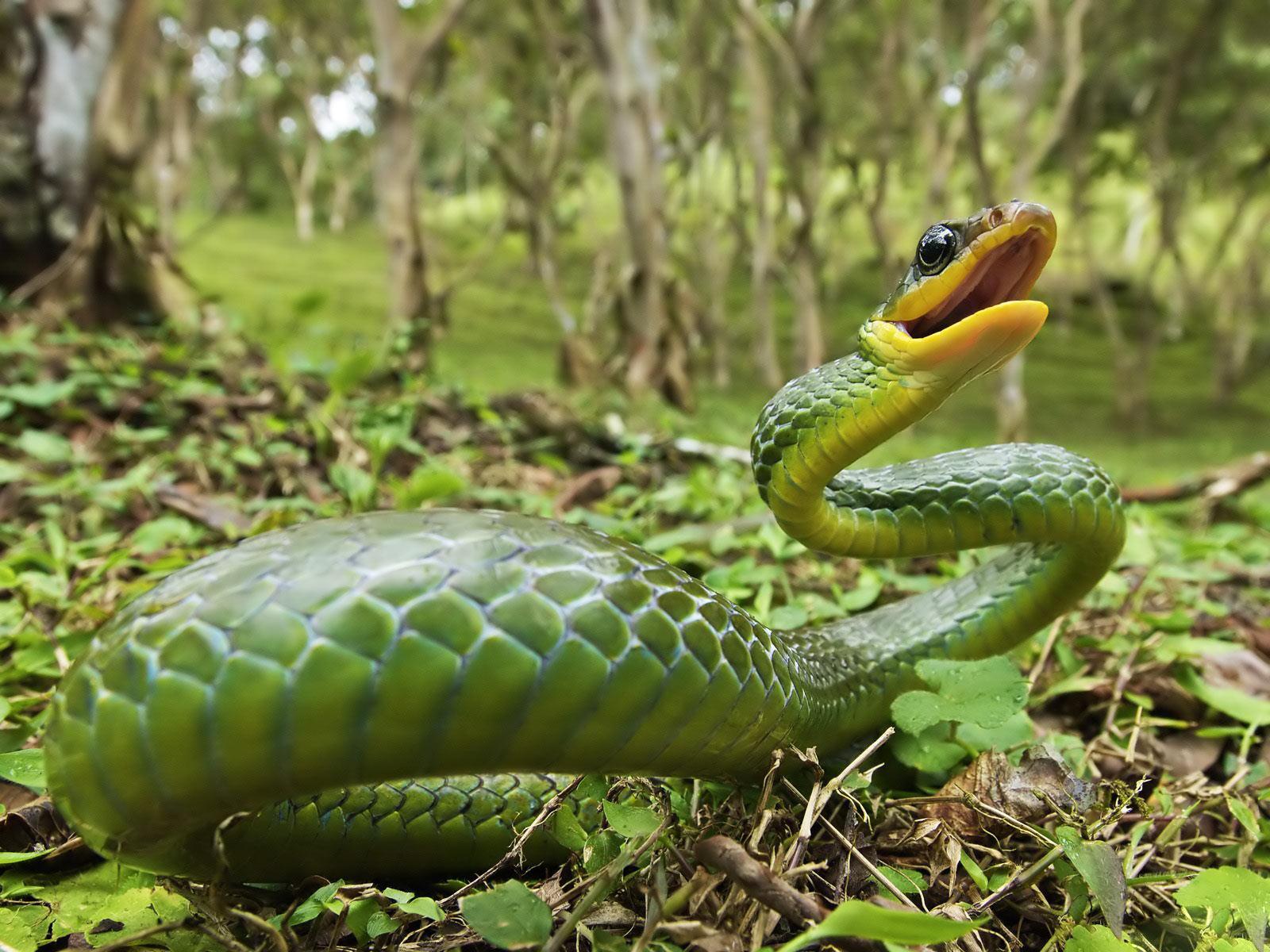 ¡Serpientes, cuidado !!!