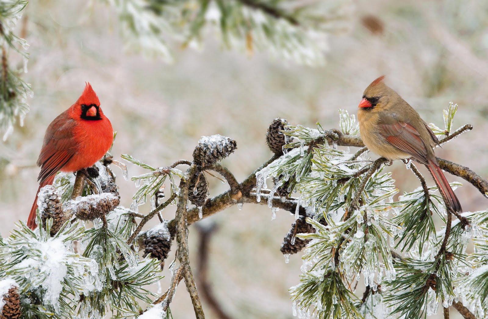 Problemas de cardenales