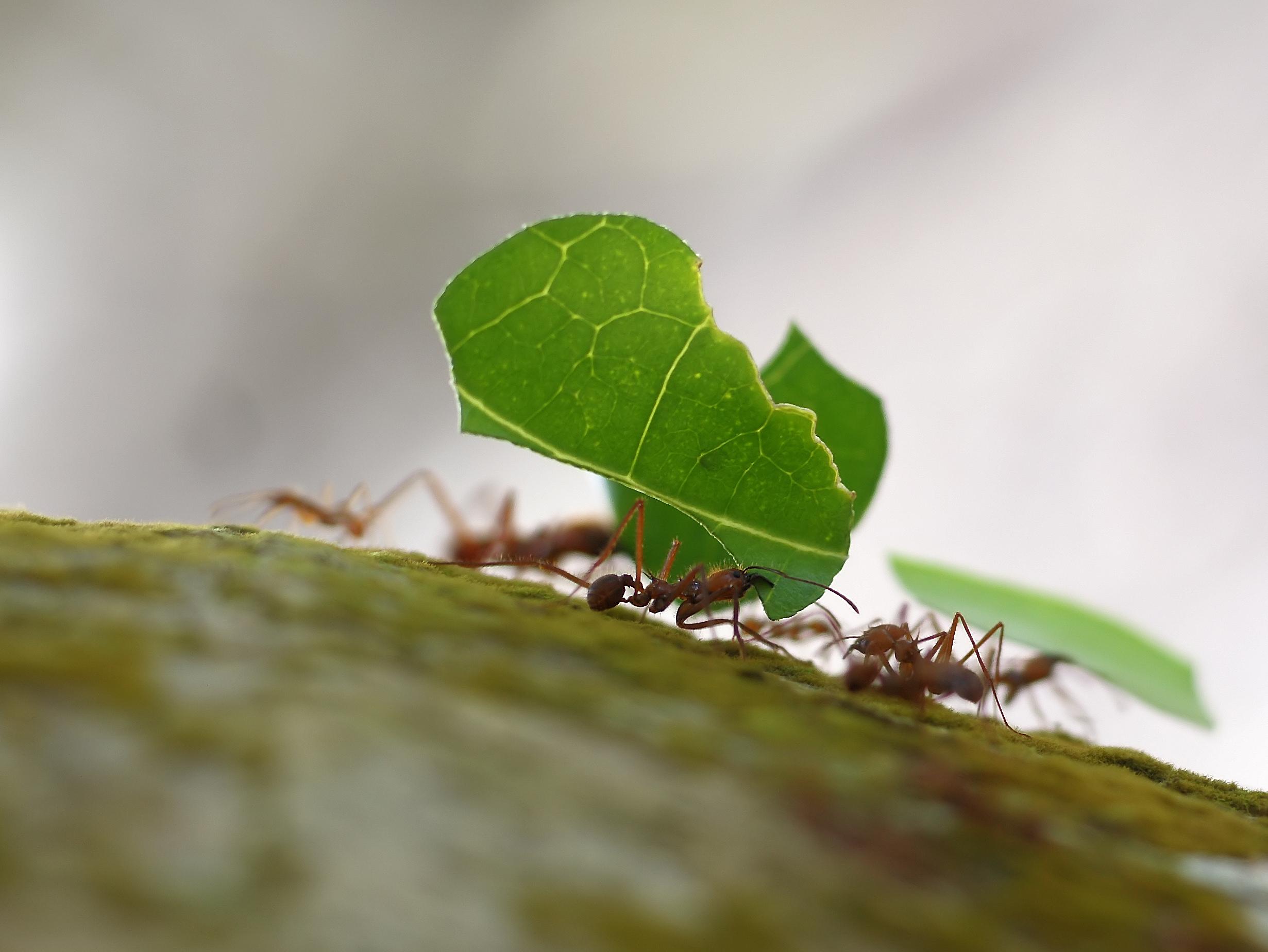 Aprende de las hormigas