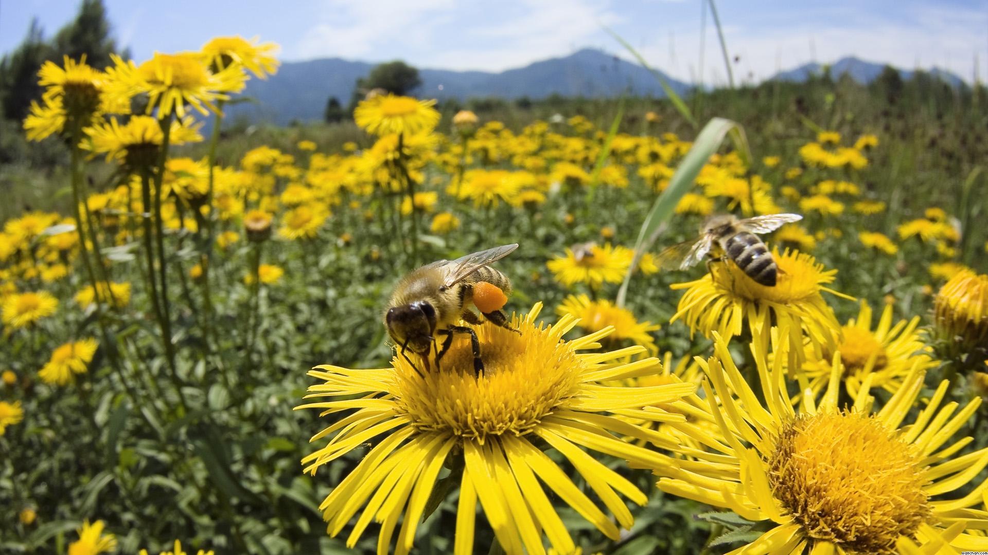 La abeja y el aguijón