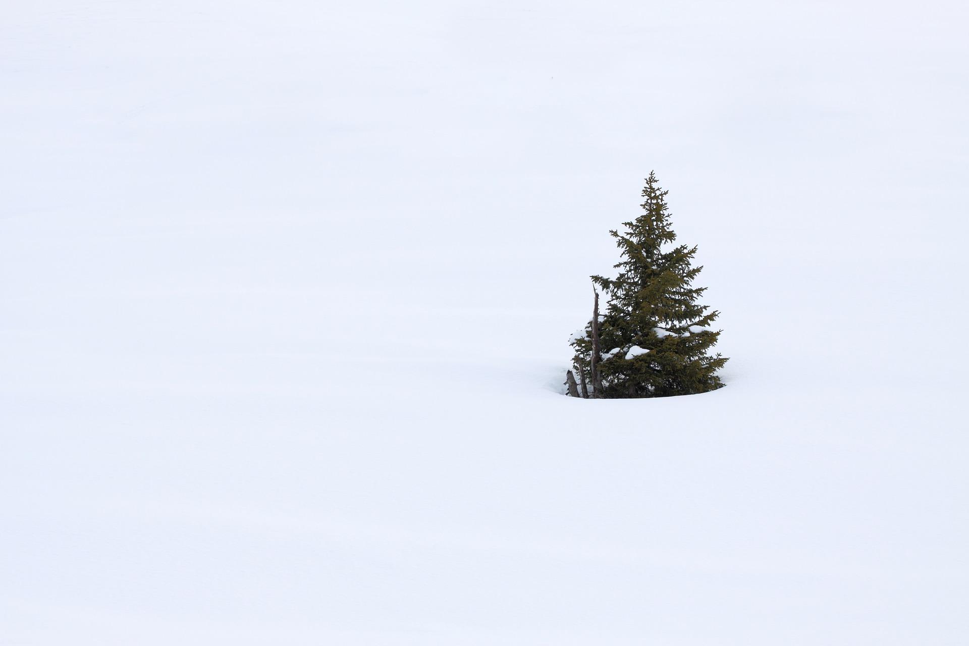 El árbol menospreciado