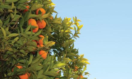El buen árbol, da buen fruto