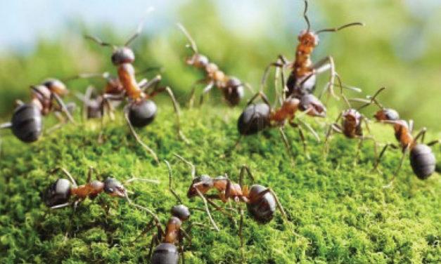 La humilde industria de las hormigas