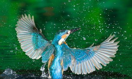 ¿Pájaros en el agua?