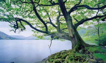 Como árboles saludables