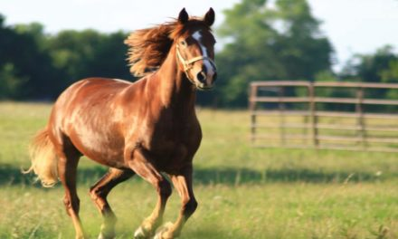 El caballo ejemplar