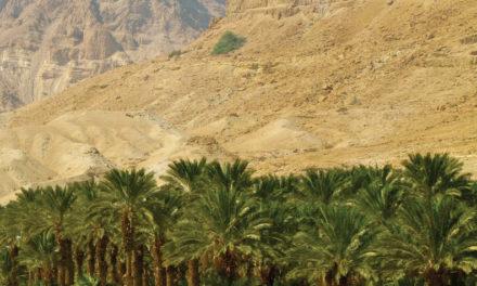 Alabanza en medio del desierto