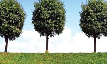 La Parábola de los tres arboles jóvenes