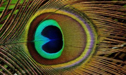 El color de las plumas