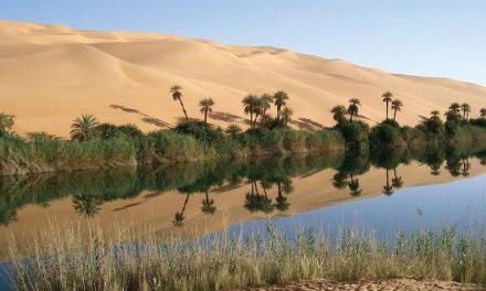 El consuelo del oasis