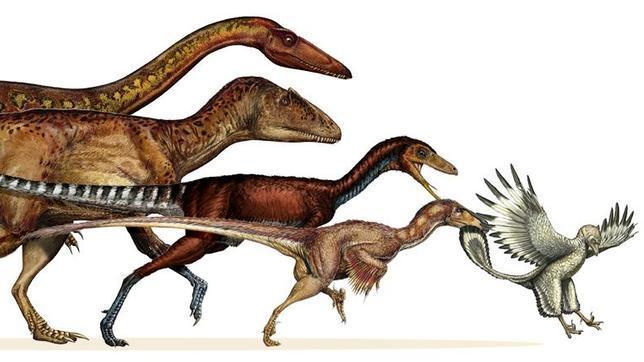 ¿Evolucionaron las aves?