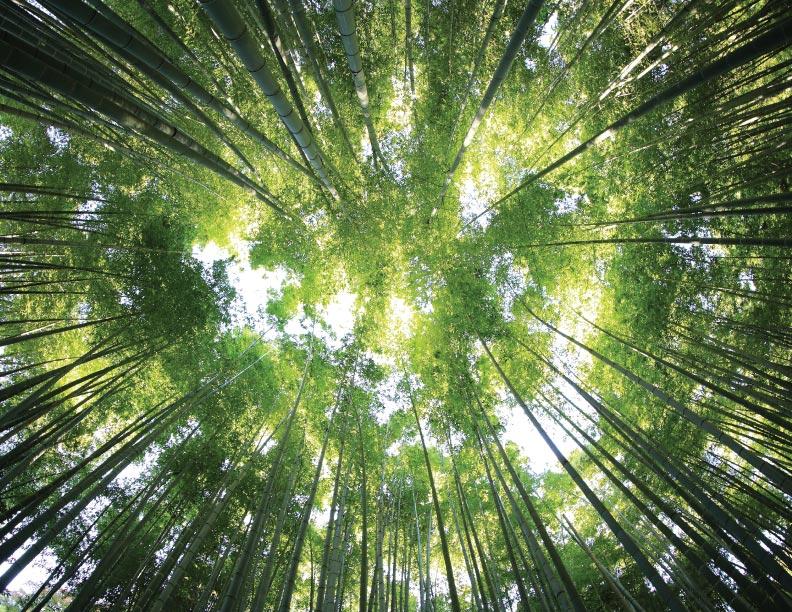 Esos extraordinarios árboles
