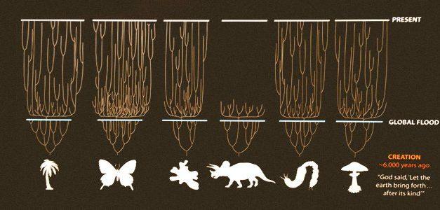 Estudio: 90% de las especies tienen un origen reciente