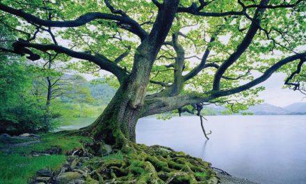 Un árbol que crece