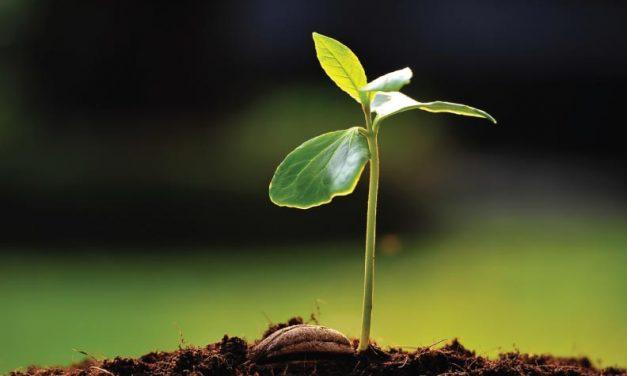 Siembra la semilla