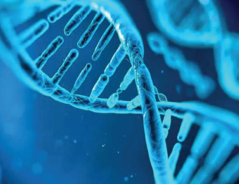 ¿Cómo apunta el ADN a la existencia de un Creador?