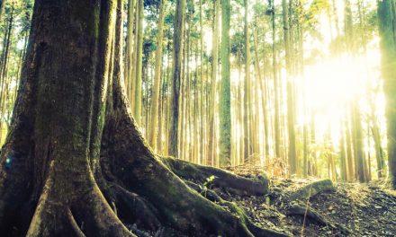 ¿Es el origen de la vida una pregunta científica?