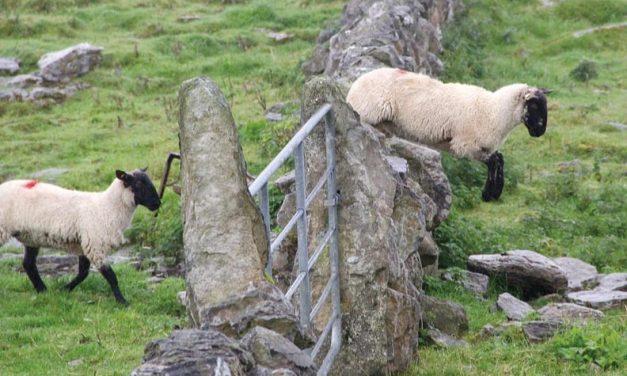 Sino puedes dormir no cuentes ovejas