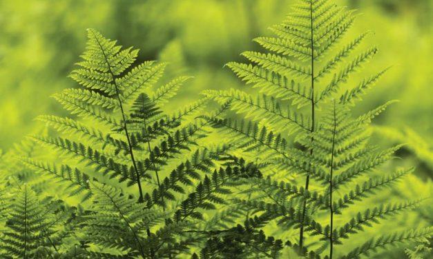 Las necesidades de las plantas