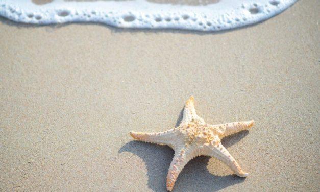 Estrellas de mar y creyentes