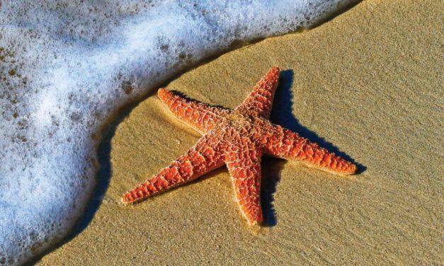Salvar estrellas de mar