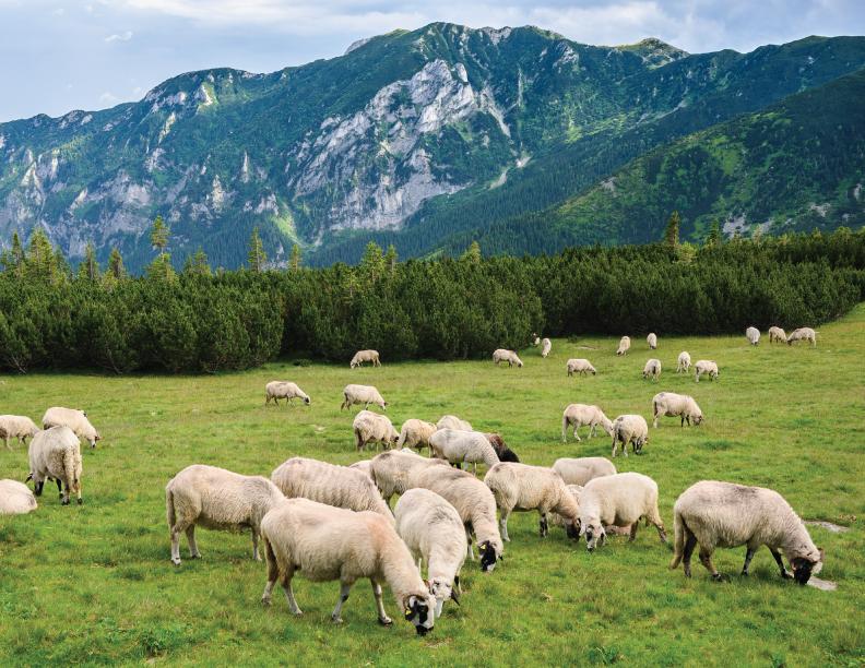 Apacienta mis ovejas