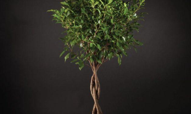 Un lindo árbol