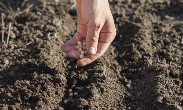 Como una siembra de hortalizas