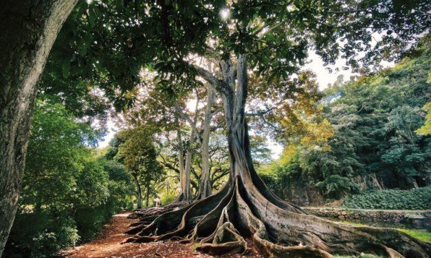 Sistema de raíces