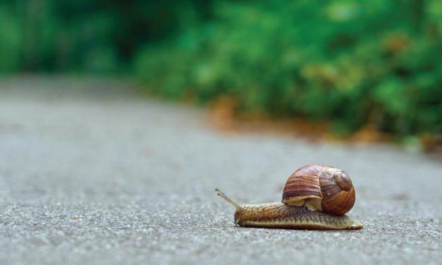 ¿A velocidad de caracol?