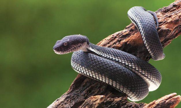Hablando de serpientes…